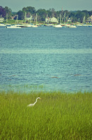 Heron, Tod's Point, Old Greenwich, CT